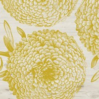 Golden Dahlias II Fine Art Print