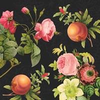 Pomegranates and Roses II Fine Art Print