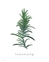 Rosemary on White Fine Art Print