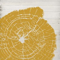 Tree Rings I Fine Art Print