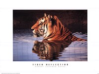 Tiger Reflection Fine Art Print