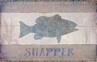 Snapper Fine Art Print