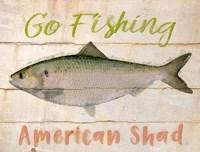 American Shad Fine Art Print