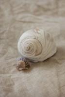 Shells I Fine Art Print