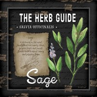 Herb Guide Sage Fine Art Print