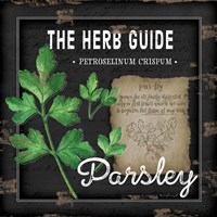 Herb Guide Parsley Framed Print