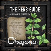 Herb Guide Oregano Framed Print