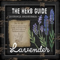 Herb Guide Lavender Framed Print