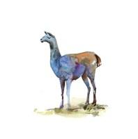 Llama I Fine Art Print