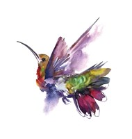 Colorful Hummingbird Fine Art Print