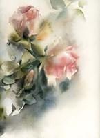 Misty Roses Fine Art Print