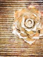 White Wynn Rose Fine Art Print
