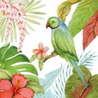 Treasures of the Tropics VII Framed Print