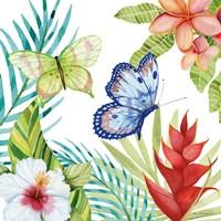 Treasures of the Tropics VI Framed Print