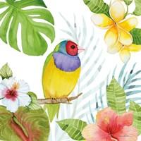 Treasures of the Tropics V Framed Print