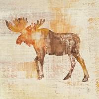 Moose Study Fine Art Print