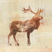 Elk Study v2 Fine Art Print