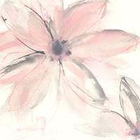 Blush Clematis II Fine Art Print