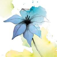 Watercolor Graphite Flower V Framed Print