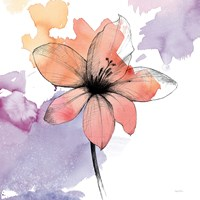 Watercolor Graphite Flower II Fine Art Print