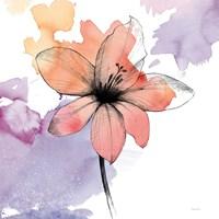 Watercolor Graphite Flower II Fine Art Print