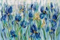 Iris Flower Bed Fine Art Print