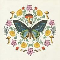 Butterfly Mandala IV Framed Print