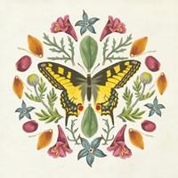 Butterfly Mandala III Framed Print