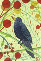 Blackbird 2 Fine Art Print