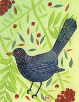 Blackbird 3 Fine Art Print
