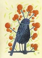 Blackbird Oranges Fine Art Print