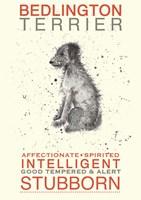 Bedlington Terrier Fine Art Print