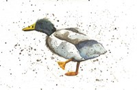 Duck 1 Fine Art Print