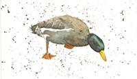 Duck 3 Fine Art Print