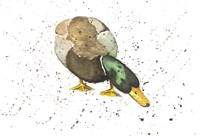 Duck 4 Fine Art Print