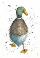 Duck 5 Fine Art Print
