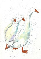 Duck 8 Fine Art Print