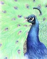 Mr. Peacock Fine Art Print