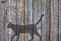 Barn Cat Shadow 5 Fine Art Print