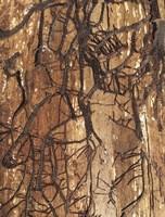 Firewood 2 Fine Art Print