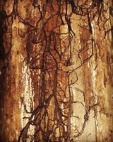 Firewood Fine Art Print