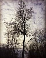 Tree In November Fine Art Print