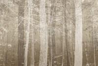 Forest Mist Fine Art Print