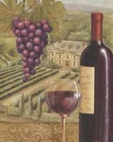 French Vineyard IV Framed Print