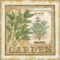 Fine Herbs II Framed Print