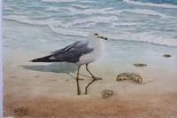 1 Seagull Fine Art Print