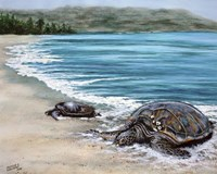 2 Turtles Fine Art Print
