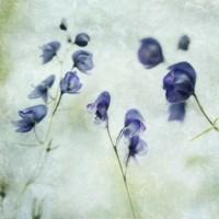Memories Of Spring Fine Art Print