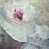 White And Pink Fine Art Print