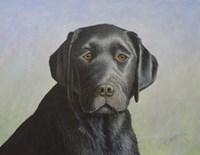 Black Labrador Retriever Fine Art Print